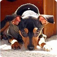 Adopt A Pet :: Wally - Nashville, TN