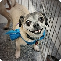 Adopt A Pet :: Smokey - Austin, TX