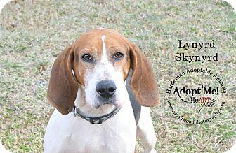 Treeing Walker Coonhound/Coonhound Mix Dog for adoption in Bolivar, Tennessee - Lynyrd Skynyrd