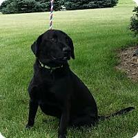 Adopt A Pet :: Cash - Lewisville, IN