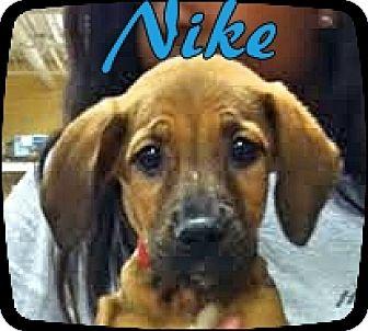 Hound (Unknown Type) Mix Puppy for adoption in Ahoskie, North Carolina - Nike