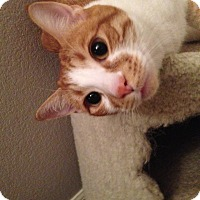 Adopt A Pet :: Munson - San Ramon, CA