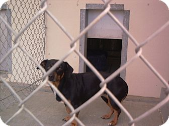 Dachshund Mix Dog for adoption in Reedsport, Oregon - Mina