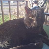 Adopt A Pet :: Speks - Virginia Beach, VA