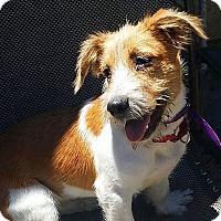 Adopt A Pet :: Tigger - Osteen, FL