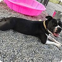 Adopt A Pet :: Diamond - Barco, NC