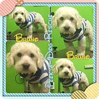 Adopt A Pet :: Bruno - South Gate, CA