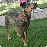 Adopt A Pet :: Millie (Cocoa Center) - Cocoa, FL