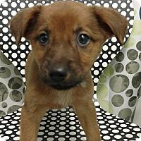 Adopt A Pet :: ALANA - Tampa, FL