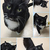 Adopt A Pet :: Snicket - Frankfort, IL