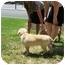 Photo 4 - Labrador Retriever Mix Puppy for adoption in Cumming, Georgia - Nubbles