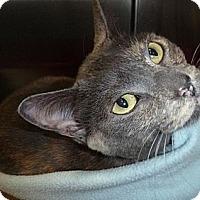 Adopt A Pet :: Hailey - St. Petersburg, FL