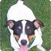 Adopt A Pet :: SALLY SUE - Phoenix, AZ