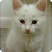 Adopt A Pet :: Spot - Morgan Hill, CA