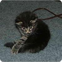 Adopt A Pet :: Boots - East Tawas, MI
