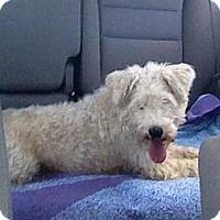 Adopt A Pet :: Cameron - Crystal River, FL