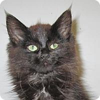 Adopt A Pet :: Trinee - Norwich, NY