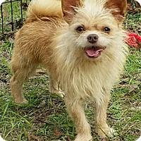 Adopt A Pet :: Little Red - geneva, FL