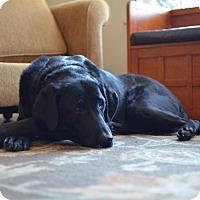 Adopt A Pet :: Lizzie - Cumming, GA