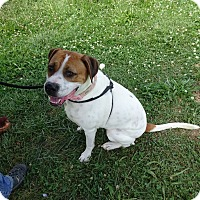 Adopt A Pet :: Lucy - Delaware, OH