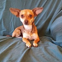 Adopt A Pet :: Bridget - Cherry Valley, CA