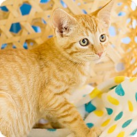 Adopt A Pet :: Peanut Butter - Montclair, CA