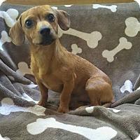 Adopt A Pet :: Sonny - Lawrenceville, GA