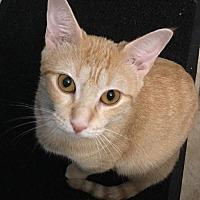 Adopt A Pet :: Goldie - Hallandale, FL