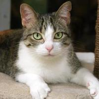 Adopt A Pet :: Valentino - Vinton, IA