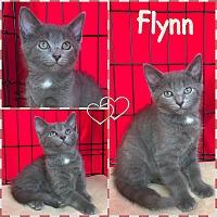 Adopt A Pet :: Flynn - Jeffersonville, IN