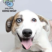 Adopt A Pet :: Shelby - Knoxville, TN