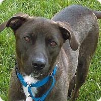 Adopt A Pet :: Lulu - Columbia, IL