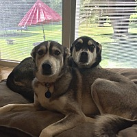 Adopt A Pet :: Murphy and Mackenzie - Sagaponack, NY