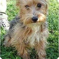 Adopt A Pet :: Ranger - Plainfield, CT