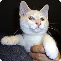 Adopt A Pet :: Marcus - Saint Albans, WV