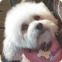 Adopt A Pet :: Morgan - La Costa, CA