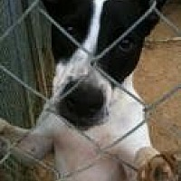 Adopt A Pet :: Percy - Jackson, MS