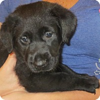 Adopt A Pet :: Missy - Greenville, RI