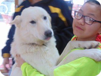 German Shepherd Dog Mix Dog for adoption in Greeneville, Tennessee - Anna
