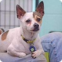 Adopt A Pet :: Sparky - Eugene, OR