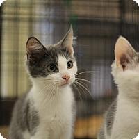 Adopt A Pet :: Thyme - Richmond, VA