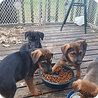 Adopt A Pet :: Martin (M) and Mary (F) - Antioch, IL