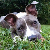 Adopt A Pet :: Cecilia - Grayslake, IL