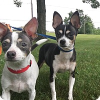 Adopt A Pet :: Baby & Princess - Elyria, OH