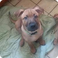 Adopt A Pet :: Jacob - Winchester, VA
