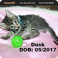 Adopt A Pet :: Dusk - Chandler, AZ