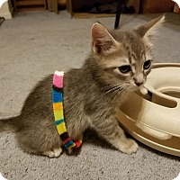 Adopt A Pet :: Crackerjack - Mission Viejo, CA