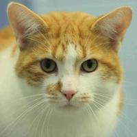 Adopt A Pet :: Flounder - Lafayette, IN