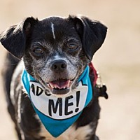 Adopt A Pet :: Maddison - Pacific Grove, CA
