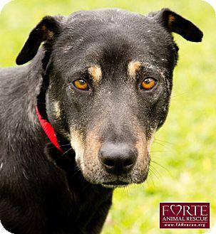Doberman Pinscher/Shar Pei Mix Dog for adoption in Marina del Rey, California - Rose